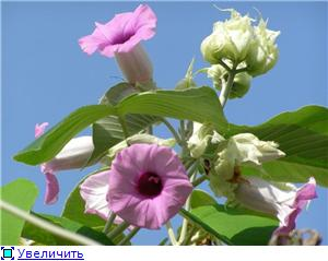 Орхидеи и прочая красота на о. Пхукет - Страница 2 7fc732d47308t