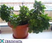 Рыськино СЧАСТЬЕ 4bfcdb476f96t