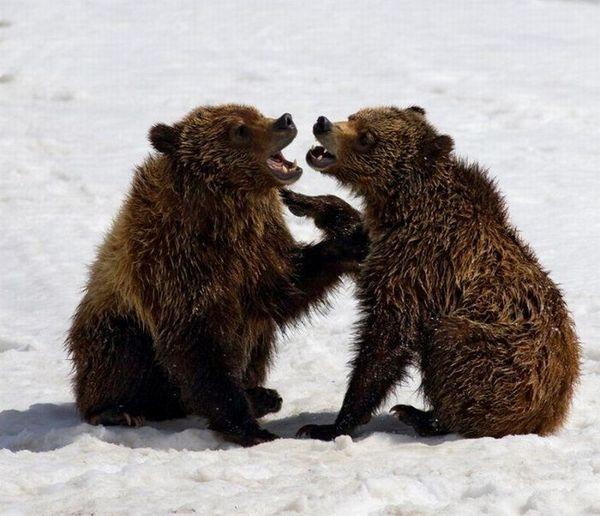 Ничто человеческое медведям не чуждо 28c138c51629