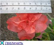 Красота без границ - Страница 2 5795f23fb80ct