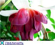 ФУКСИИ В ХАБАРОВСКЕ  - Страница 2 7d8ffb788332t