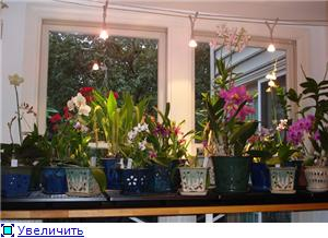 Размещение орхидей 4286216f01dct