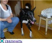 Чара - потрясающая собака! Ищет лучших хозяев! Bd2a5f982950t