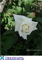 Лето в наших садах - Страница 3 Fe955bf93d5et