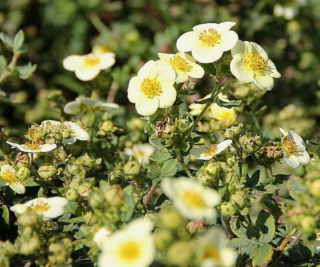 Экскурсия по Ботаническому Саду 14d1fb17c9ba