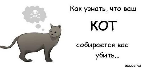 Наши любимые котярчики Ba8acc257d6d