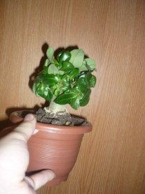 продам семена экзотических растений Ee64b454cb4b