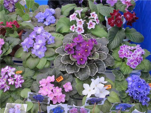 Выставка цветов - Страница 4 528d126286bd