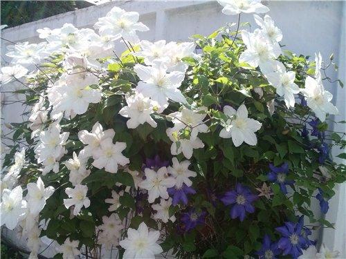 И у цветов весна)) 51a74a7edbc3