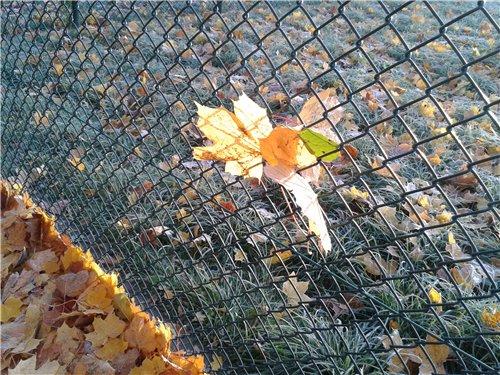 Осень, осень ... как ты хороша...( наше фотонастроение) - Страница 7 37789105d1e6