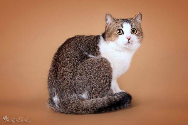 Кошки-Коты-Котята Cbc025cb35d9