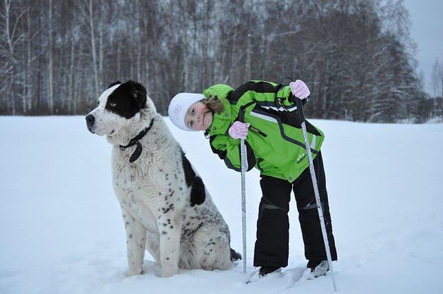 Собаки Татьяны Моисеенковой, кот Мензурка - Страница 4 09262ddd40bb