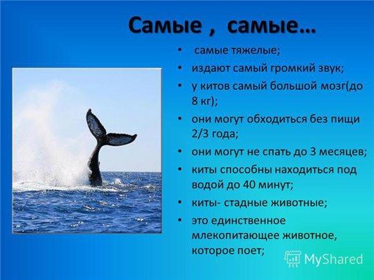 19 февраля - Всемирный день защиты морских млекопитающих (День кита) 9011d0b01b4d