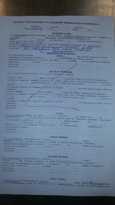 Москва, Селли, сука 10+ - Страница 2 1fc1227b3748