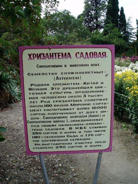 Парад хризантем в Никитском ботаническом саду. Крым  A43133b4f77f