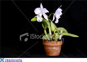 Горшки для орхидей 9b7ab0924809t