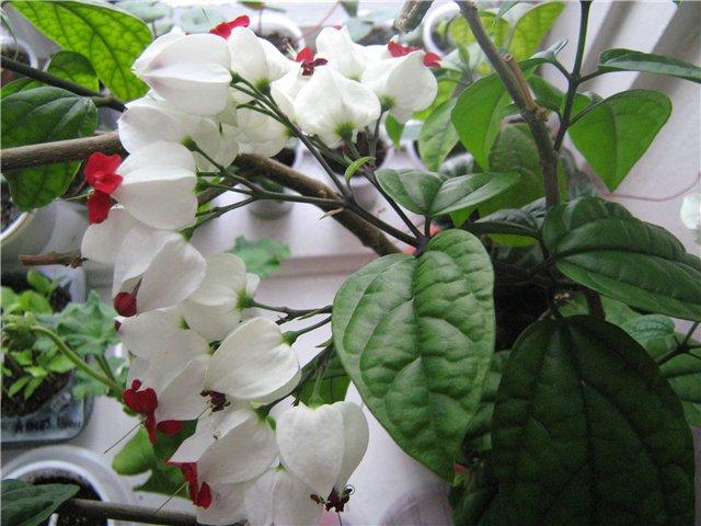 Моё цветочное богатство - Страница 19 0b4fba40b538