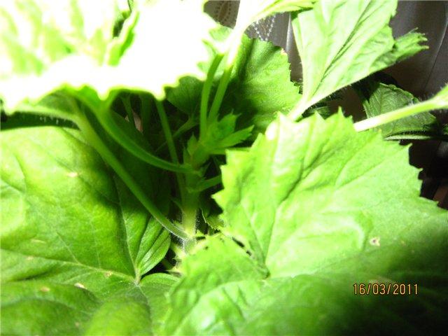 Мои цветулечки - Страница 11 1ec436993351