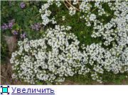 Растения для альпийской горки. - Страница 2 6924a09c22cdt