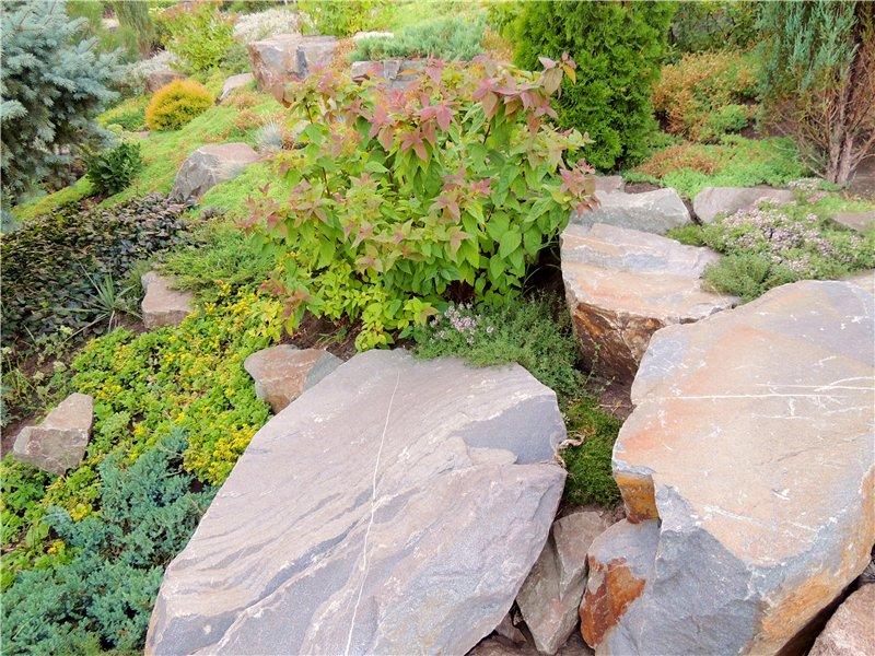 Фотографии цветов и деревьев 6cad6846a3c5