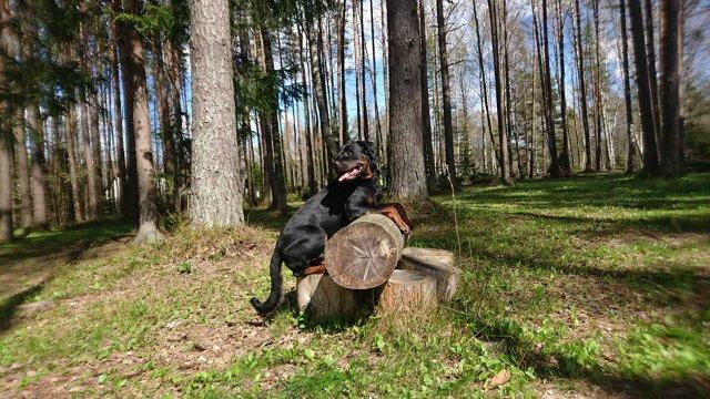 Наши собаки, друзья и гости, кот Мензурка - Страница 30 B6d480caf422