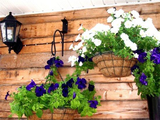 Цветы на балконе. - Страница 6 6b56cbe2d8ad