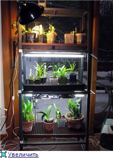 Размещение орхидей 7c4d87c5c594t
