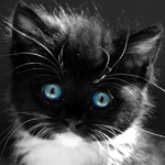 Аватары с животными - Страница 2 8750dc5e3a72