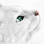 Аватары с животными E2cd78a904c3