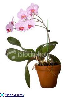 Горшки для орхидей 9679a92ef5e0t