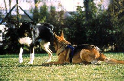 Диалог с собакой: сигналы примирения 4319467b531b