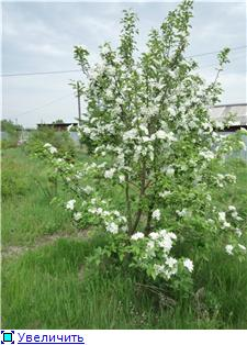 Яблоня: сорта и агротехника. Ba80e2e0695at