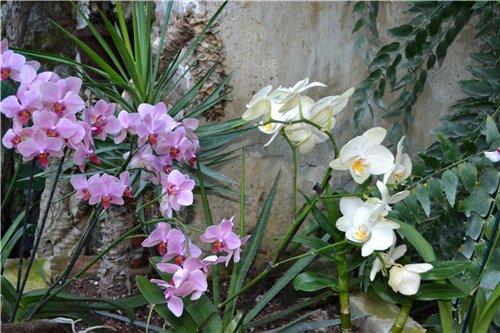 Выставка орхидей Никитского ботанического сада 2b4e0584dc2c
