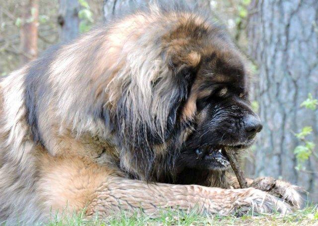 Наши собаки, друзья и гости, кот Мензурка - Страница 30 B219bd142e38