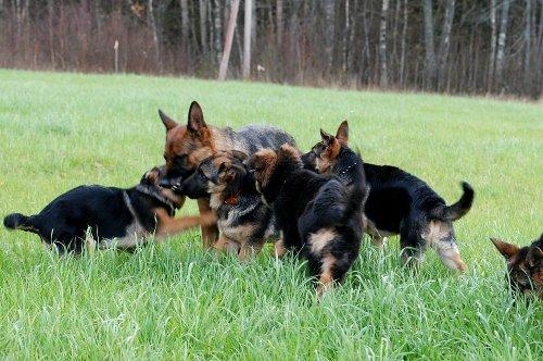 Собаки Татьяны Моисеенковой, кот Мензурка - Страница 8 A4236a8b9eff