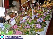 Цветочные выставки и ярмарки в г. Хабаровске. - Страница 2 4937fd19098dt