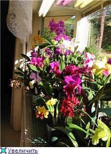 Размещение орхидей 800409405116t
