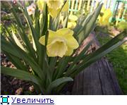Весна идет, весне дорогу! - Страница 8 0bdda92040b4t