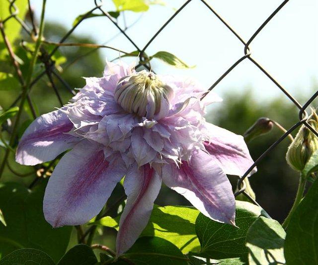 Экскурсия по Ботаническому Саду 0499d5b2ec09