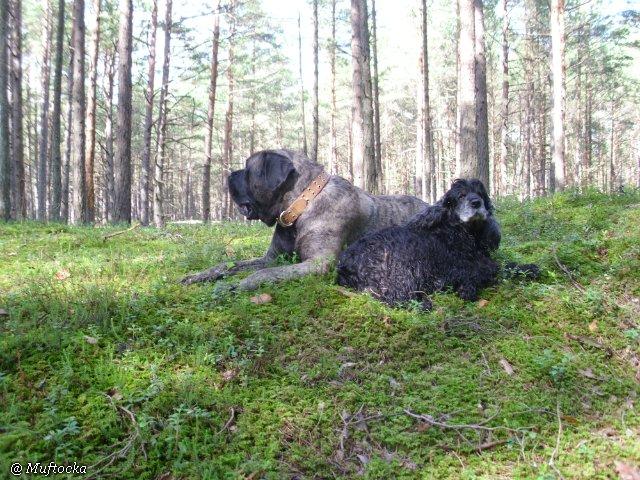 Наши собаки, друзья и гости, кот Мензурка A4869057d170
