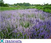 Наши домашние растения - Страница 2 055a7b3d9c02t