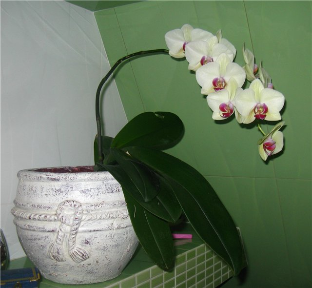 Цветочки комнатные!...и не только... Bdfb439537b4