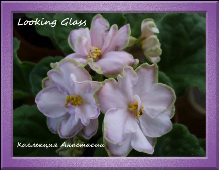 Looking Glass 9c2f13c0cc72