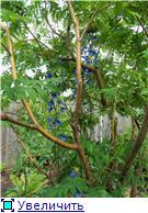 Лето в наших садах - Страница 3 Ad54e8ab3873t