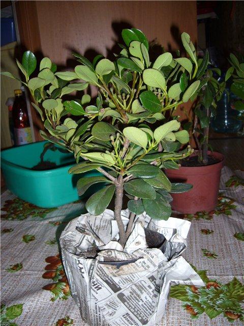 Растения из Сочинского питомника 3c2eb583d870