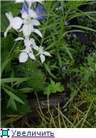 Лето в наших садах - Страница 5 90fccf6f5866t