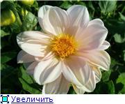 Георгины в цвету - Страница 2 7a05da8a1557t