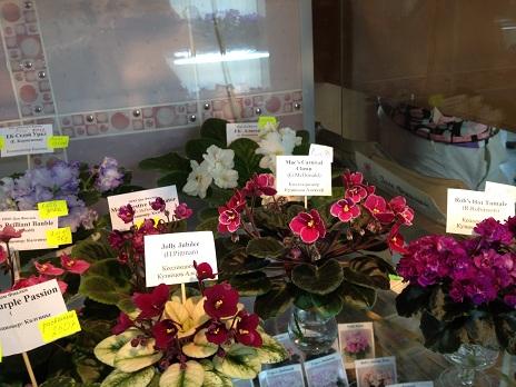 Выставка цветов - Страница 2 710241a18109