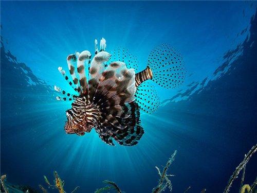 Этот удивительный подводный мир - Страница 2 Ed99e0cb1c7b