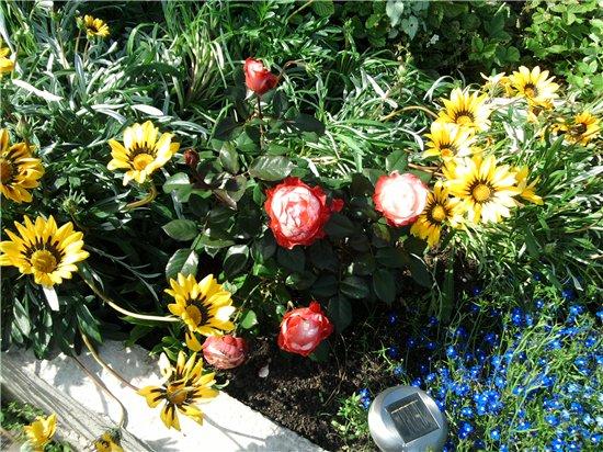 Цветы на балконе. - Страница 6 7d0a790763c3